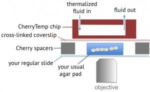 CherryTemp-temperature-control-microscopy-yeast