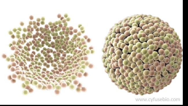 Spheroids as powerul 3D-cell culture intermediates