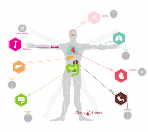 Scheme of the possibilities of the Organ-on-chip programme