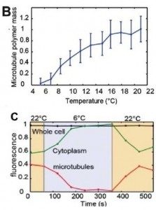 Temperature-control-microscopy-BC
