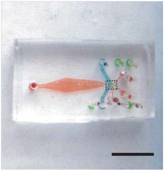 C. elegans immobilization via microfluidics: a short review