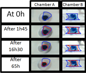 evaporation-sealed-chamber-live-cell-imaging-results-experiment