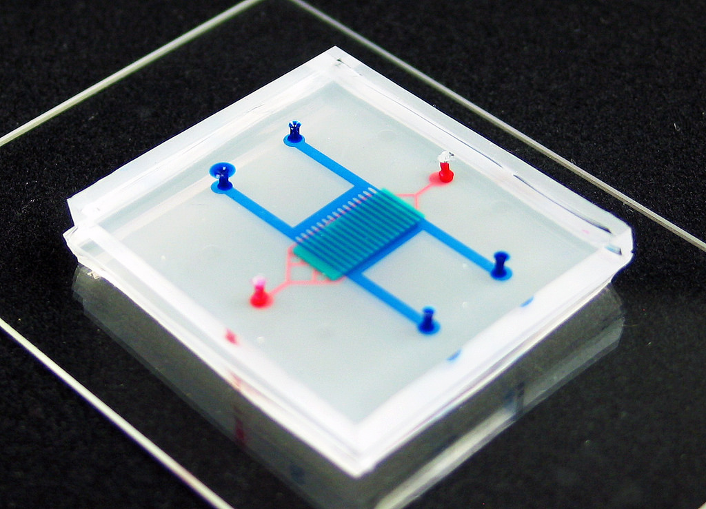 Blood brain barrier microfluidic models [Brain on Chip]