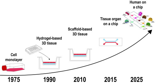 From organ on a chip to body on a chip - Evolution from in vitro models to multi-OOC systems.