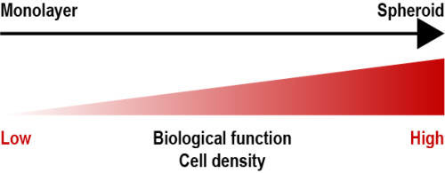 Fig 1: Spheroid characteristics. Spheroids show increased biological function and increased cell density in comparison to cell monolayer.