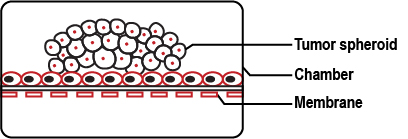 """Fig 3: """"Tumor on a chip"""" represents a vasculature mimicking microfluidic device consisting of PDMS chambers with highly organized microchannels and pneumatic chamber (dark gray) on either sides."""