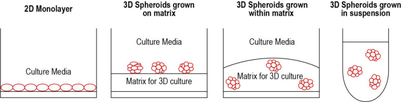 Figure 2: Scheme of different ways to culture spheroids for 3D cell culture