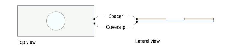 Spacer protocol for C elegans_Fig-01
