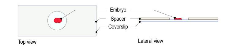 Spacer protocol for C elegans_Fig-02