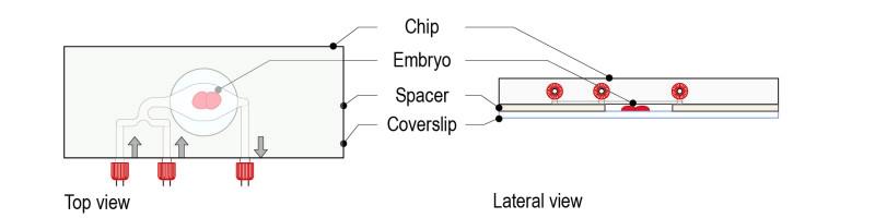Spacer protocol for C elegans_Fig-03