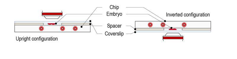 Spacer protocol for C elegans_Fig-04