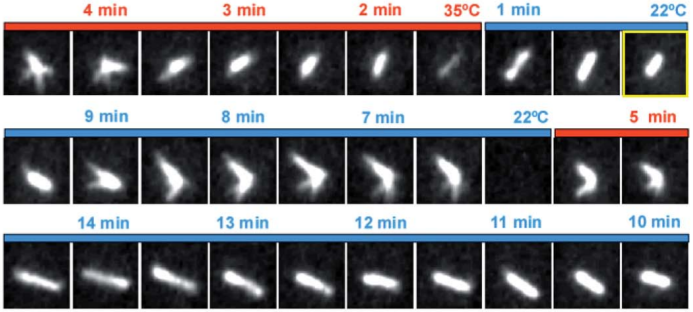 Fast microfluidic temperature control during high resolution live cell imaging