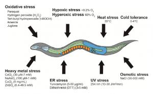 C.elegans abiotic stress assay methods