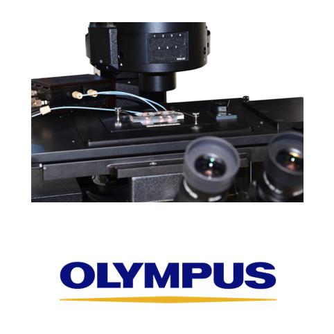cherrytemp-olympus-microscope
