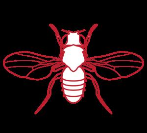 Picto-Categories-Drosophila-Fly