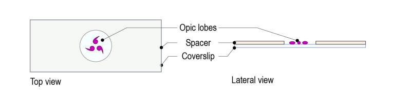 Protocol for Drosophila optic lobes_Fig_All-02
