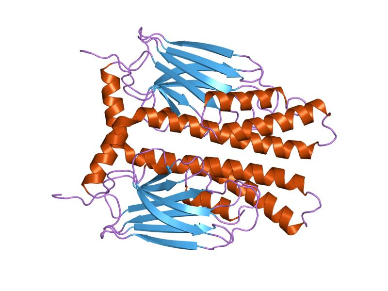 Heat shock protein Hsp70