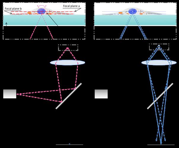 CherryBiotech-confocal-microscopy-how-it-works