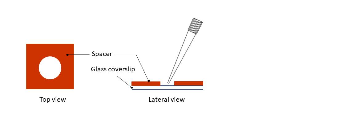 Fig 3 in vitro