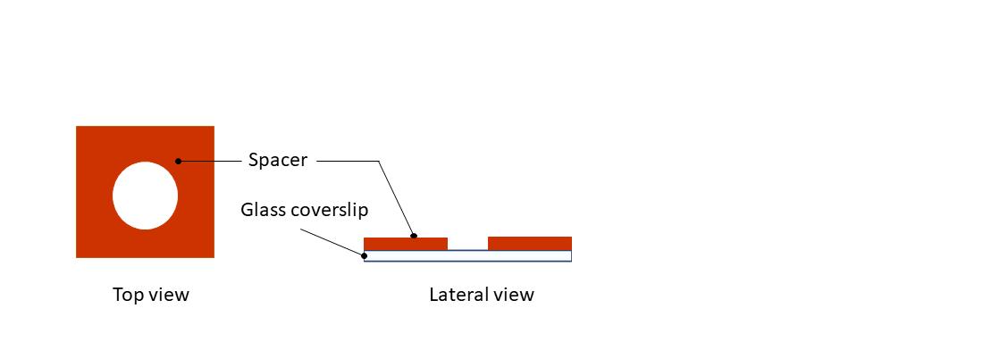 fig 1 in vitro