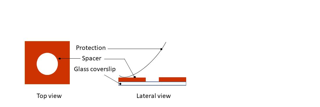 fig 2 in vitro