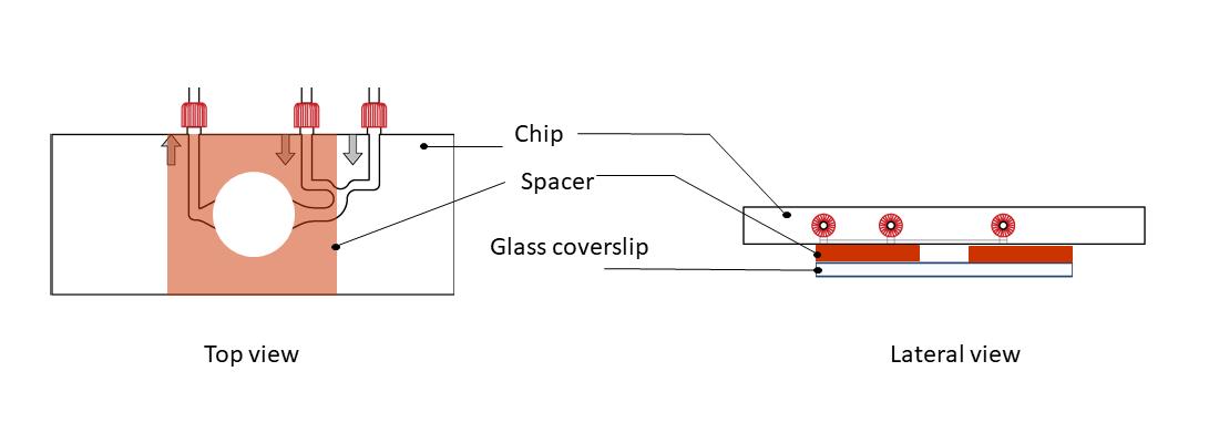 fig 4 in vitro