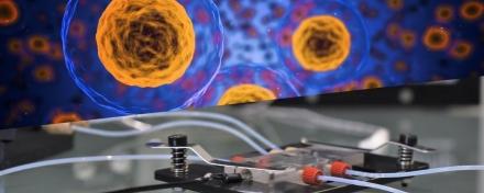 Medium-perfusion-cell-biology