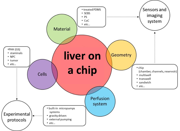 Liver on a chip and main features