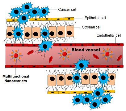 Cancer cells and the tumor microenvironment