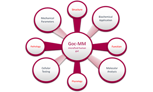 H2020 PROGRAM | GoC-MM