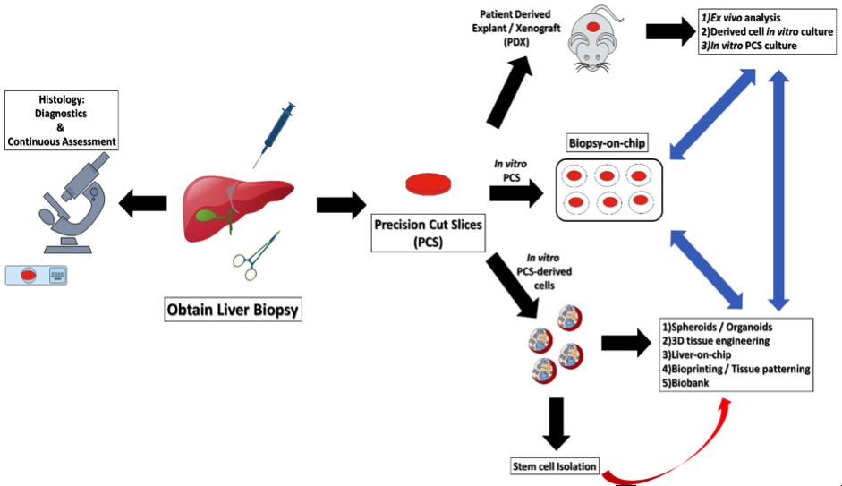 Cherry_Biotech_liver_biopsy