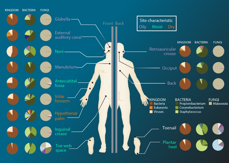 Human Microbiota and Microbioma : in vitro Culturing Approaches