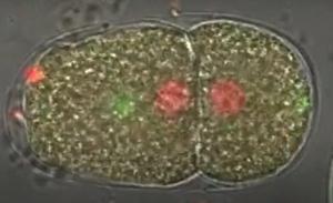 cherrybiotech-c-elegans-cherrytemp